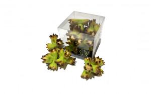 Petit cube noisette